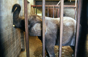 zoos are prisons Zoos pose several risks that particularly affect animals there are many problems that come with keeping animals in zoos one of them is the confined spaces where the animals are forced to live in.