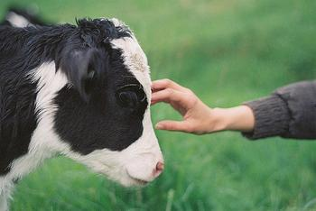 Becoming Vegetarian For a Future?