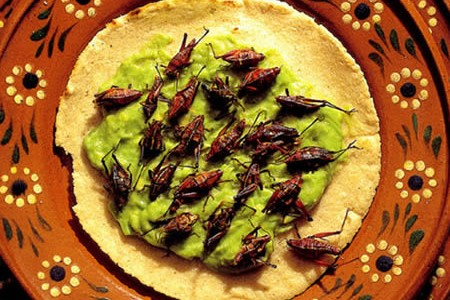 Crickets in your Plate?