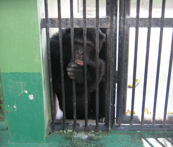 zoos are prisons for animals essay Zoos = animal prisons animals=inmates that is a valid subject, but equalling zoos=prisons and inhabitants=inmates is simply ridiculous.