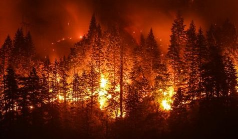 NorCal forests reduced to ashes by the camp fire