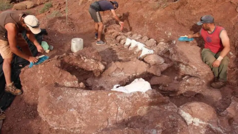 Biggest Dinosaur Found in Argentina