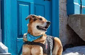 Pets Mental Health Saver