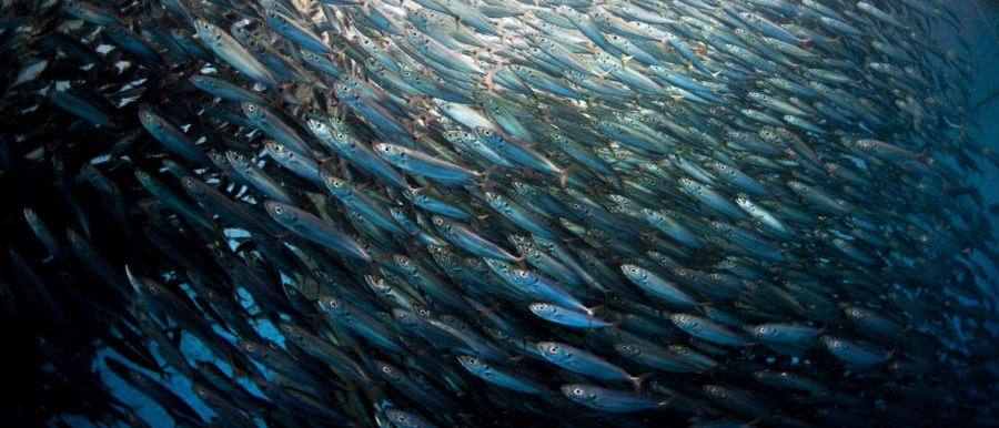 Why Overfishing is Bad and How to Stop it