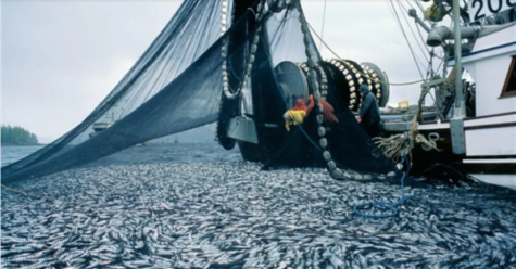 Catch Share a Solution to Overfishing?